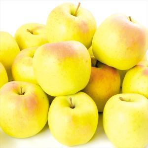 りんご 青森産 もりのかがやき 10kg1箱 送料無料 ご家庭用 林檎 食品|kokkaen
