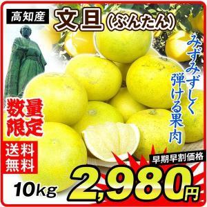 みかん 大特価 高知産 文旦 10kg1箱 送料無料 ご家庭用 食品 kokkaen