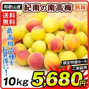 生梅 和歌山産 紀州南高梅 【熟梅】 5kg1箱 送料無料 うめ 梅 冷蔵便 食品|kokkaen