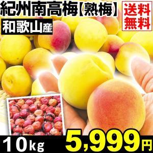 生梅 和歌山産 紀州南高梅 【熟梅】 10kg1箱 送料無料 うめ 梅 冷蔵便 食品|kokkaen