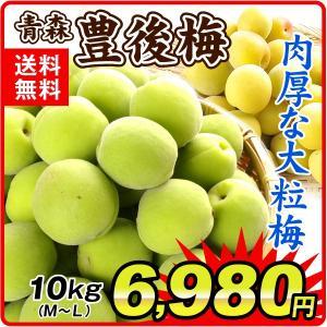 生梅 青森産 生梅 【豊後梅】 10kg1組 送料無料 うめ 梅 冷蔵便 食品|kokkaen