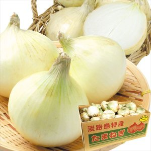 たまねぎ 淡路島産 新たまねぎ 10kg1箱 送料無料 玉ねぎ 食品|kokkaen