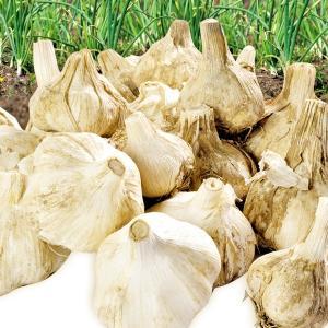 ニンンク 青森産 土付きにんにく 1kg にんにく 訳あり 国産 食品 国華園|kokkaen