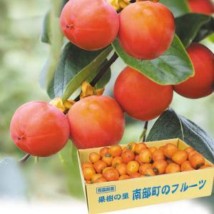 柿 かき 青森産 妙丹柿 「串柿用渋柿」 5kg 果物 食品 国華園|kokkaen