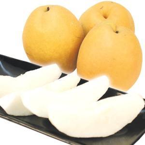 梨 鳥取産 王秋梨(5kg)5〜11玉 ご家庭用 おうしゅう 大玉 なし 和梨 果物 フルーツ 国華園|kokkaen