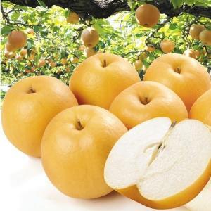 梨 鳥取産 新興梨(5kg)8〜12玉 ご家庭用 しんこう なし 和梨 果物 フルーツ 国華園|kokkaen