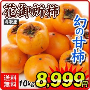 鳥取産 花御所柿 10kg 1箱|kokkaen