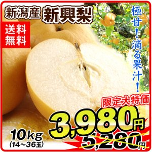 梨 新興梨 10kg 超特価 産地おまかせ ご家庭用 なし 和梨 国華園|kokkaen