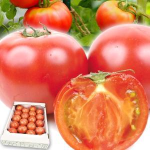 食品 熊本産 トマト 約3.5kg 1組 野菜 国華園|kokkaen