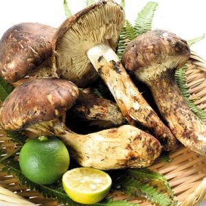 松茸 中国産 松茸 約150g1箱 野菜 冷蔵便 国華園|kokkaen