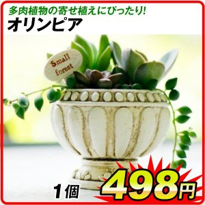 鉢 植木鉢 ポリ製 多肉植物 寄せ植え かわいい プチオアシス・オリンピア 1個 女性 プレゼント|kokkaen