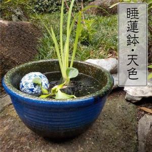 睡蓮鉢 すいれん鉢 天色(あまいろ)小 1個 直径29.5・高さ16.5cm メダカ鉢 ハス鉢 陶器 水鉢 ビオトープ 国華園|kokkaen