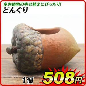 鉢 植木鉢 ポリ製 多肉植物 寄せ植え かわいい プチオアシス・どんぐり 1個 女性 プレゼント|kokkaen