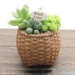 今流行の多肉植物の寄せ植えにぴったりの、おしゃれなポリ製植木鉢。  ●商品情報 シンプルなデザインは...