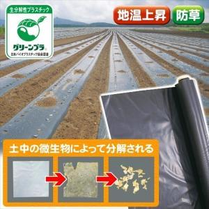 農業用マルチ マルチング材 ビオフレックスマルチ 0.95×200m 1巻1組 生分解 マルチシート|kokkaen