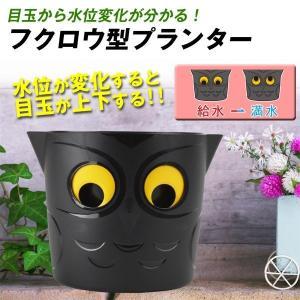 鉢 プランター キョロキョロふくろう鉢 1個 目が動く かわいい 園芸 ガーデニング フクロウ型プランター 梟|kokkaen