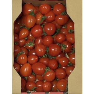 トマト フルーツミニトマト 心の実 ベリーミニ 800g(1箱)