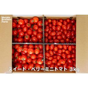 トマト フルーツミニトマト 心の実 スイート&ベリー 3.0kg(1箱)
