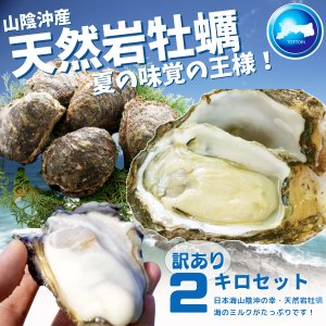 天然岩牡蠣(活) たっぷり2キロ詰め込んで(訳あり大きさ色々5個-18個程度・殻付き)鳥取産 岩牡蠣 牡蠣 (岩牡蠣 カキ)