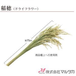 天然ドライフラワー稲穂 1束(50本)品番 530104