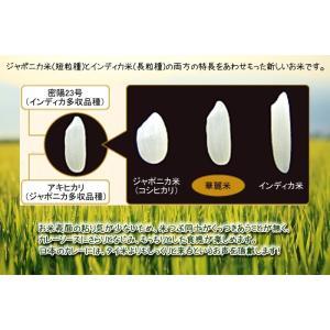 新潟県産 妙高 華麗舞 白米 1kg|komedonyakuranosuke|04