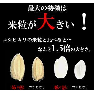 龍の瞳 白米 750g (メール便・送料無料) komedonyakuranosuke 03