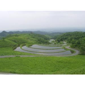 平成28年 玄米 阿蘇産山村産 棚田こしひかり 10kg|komehisa-kumamoto|04