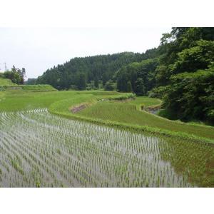 平成29年 玄米 阿蘇産山村産 棚田あきげしき 20kg|komehisa-kumamoto|05