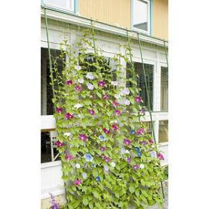 緑のカーテン 3m 伸縮ワイド1800|komeri