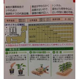 千両2号茄子【種】30粒|komesan|02