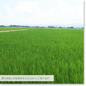 お米 10kg白米 新潟県産 コシヒカリ 5kg×2送料無料 (一部地域を除く) 平成29年産 うるち米|komeya|07