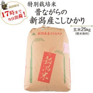 お米25kg 特別栽培米昔ながらの新潟産こしひかり玄米25kg / 白米4.5kg×5  30年産 送料無料(一部地域を除く)|komeya