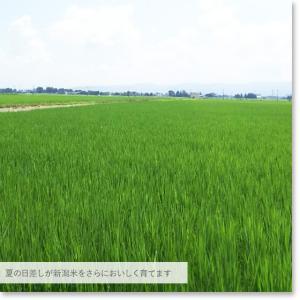 お米 25kg 特別栽培米新潟産ミルキークイーン玄米25kg(精米無料)白米4.5kg×5袋 29年産 送料無料(一部地域を除く)|komeya|06