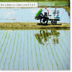 新米 お米 5kg×1袋 白米  魚沼産コシヒカリ 5kg 30年産 送料無料(一部地域を除く) うるち米 komeya 05