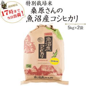 お米 10kg 安心・安全 特別栽培米桑原さんの魚沼産コシヒカリ 5kg×2袋 29年産 送料無料(一部地域を除く)|komeya