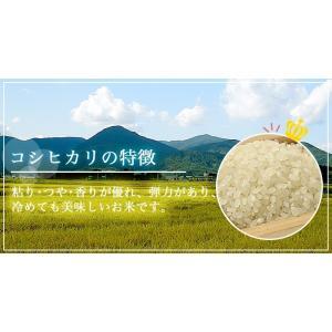 米 お米 平成30年産 福島県中通り産コシヒカリ白米10kg(5kg×2個) 送料無料 ※一部地域を除く|komeyamayoshi|02