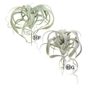 多肉植物 フェイクグリーン キセログラフィカ〔×6本入り〕インテリア