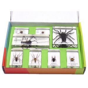 【昆虫樹脂標本】クモコレクション|konchu-hyouhon