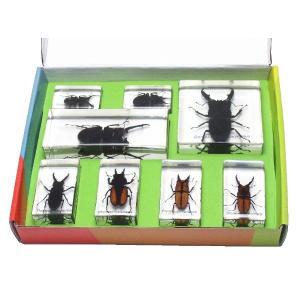 【昆虫樹脂標本】クワガタコレクション|konchu-hyouhon
