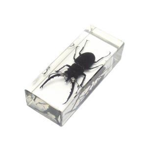 【昆虫樹脂標本】ヘルマンミヤマクワガタ