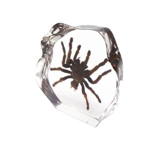 【昆虫樹脂標本】タランチュラ