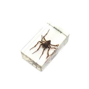 【昆虫樹脂標本】オニグモ konchu-hyouhon