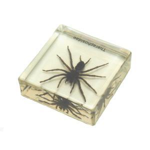 【昆虫樹脂標本】ジョウゴグモ konchu-hyouhon