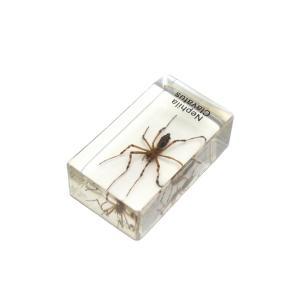 【昆虫樹脂標本】ジョロウグモ konchu-hyouhon