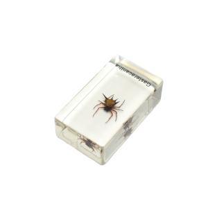【昆虫樹脂標本】トゲグモ konchu-hyouhon