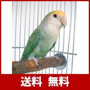 川井 KAWAI ニームパーチ S 鳥 止まり木