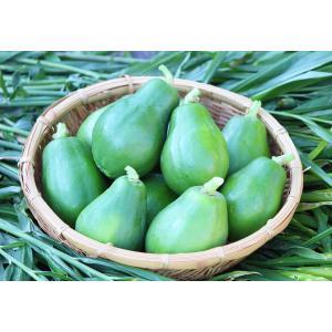 青パパイヤ3kg(農薬・化学肥料不 使用)|konohanafamily