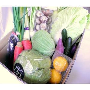 愛媛の美味しい野菜セット