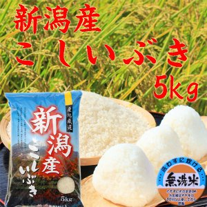 お米 5kg 無洗米 2018 新潟県産こしいぶき5kg(無洗米) (30年産 新米) 安いお米 無洗米5kg 無洗米 新米|kosihikari