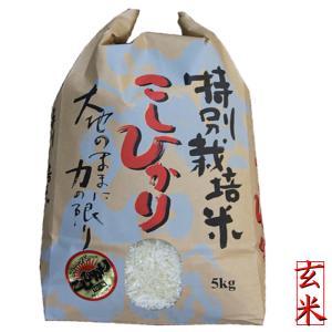 新米 「特別栽培米」 新潟産コシヒカリ玄米5kg (5kg×1袋)  令和2年 コシヒカリ玄米 お米 新潟県産こしひかり  5キロ玄米|kosihikari